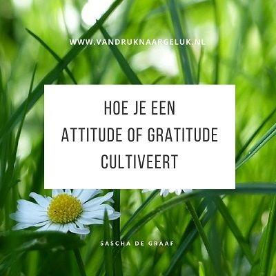 Hoe je een attitude of gratitude cultiveert